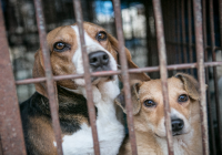 MP introduces bill to ban dog meat consumption